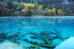 秋天jiuzhaigou湖结构树 图库摄影