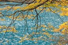 秋天jiuzhaigou湖结构树 库存照片