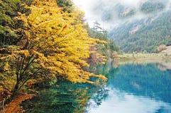 秋天jiuzhaigou湖结构树 免版税库存图片