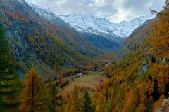 秋天lanscape在阿尔卑斯 有秋天橙色落叶松属树的自然栖所和岩石在背景,国家公园Gran Paradiso, Ita中 免版税库存照片