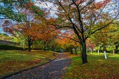 秋天Laves在广岛中央公园 库存照片