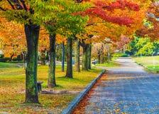 秋天Laves在广岛中央公园 免版税库存图片