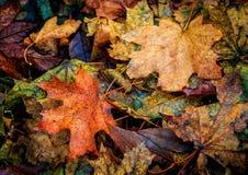 秋天leafage -好的秋天摘要背景 库存图片