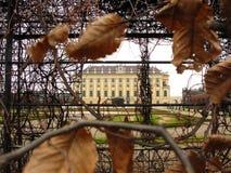 秋天Schönbrunn 免版税库存照片