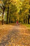 秋天sunlay在女孩去的叶子 库存照片