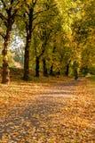 秋天sunlay在女孩去的叶子 免版税库存图片