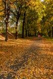 秋天sunlay在女孩去的叶子 库存图片