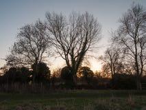 秋天treeline天空光秃的分支日落领域国家 库存照片