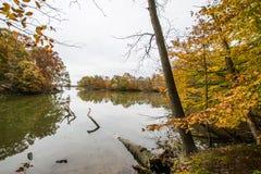 秋天Trees在Y形支架海岛上的湖边在巴尔的摩,马里兰 免版税库存图片