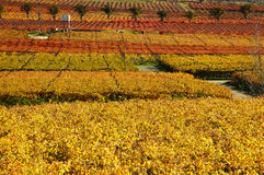 秋天vineyards16 免版税库存图片
