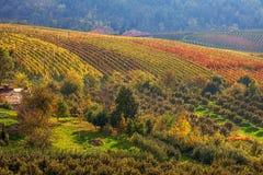 秋季乡下视图在意大利 免版税图库摄影