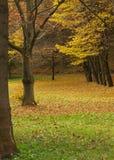 秋季公园结构树 免版税图库摄影