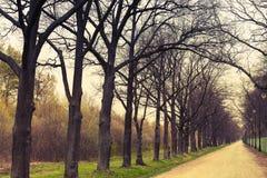 秋季公园 与不生叶的树的空的胡同透视 库存图片