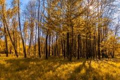 秋季公园 秋叶结构树 颜色本质上 库存照片