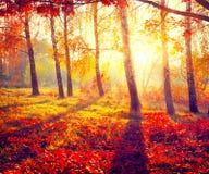 秋季公园 秋天桦树叶子草甸橙树 免版税库存照片