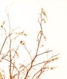 秋季分行结构树 免版税图库摄影
