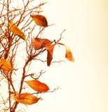 秋季分行结构树 免版税库存照片