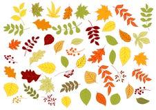 秋季叶子、草本、种子和莓果 免版税库存照片