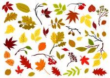 秋季叶子、莓果和草本 免版税库存图片