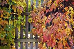 秋季叶子报道的木门 免版税库存图片