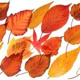 秋季叶子无缝的反复性的边界 图库摄影