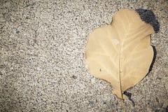 秋季叶子秋天 库存图片