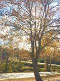 秋季叶子落 库存图片