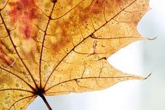 秋季叶子设计背景 黄色,橙色 免版税图库摄影