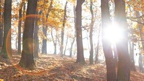 秋季在森林里 库存照片