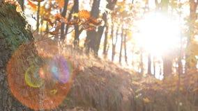 秋季在森林里 库存图片