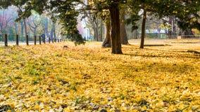 秋季在秋天北海道大学 免版税库存图片
