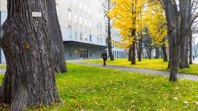 秋季在秋天北海道大学 免版税图库摄影