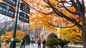 秋季在秋天北海道大学 库存图片