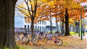 秋季在秋天北海道大学 免版税库存照片