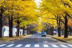 秋季在秋天北海道大学 库存照片