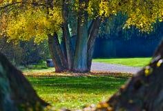 秋季场面在有自然框架的一个公园 库存照片