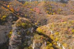 秋季山森林 免版税图库摄影