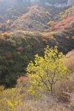 秋季山森林 免版税库存图片