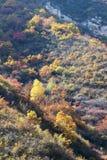 秋季山森林 免版税库存照片