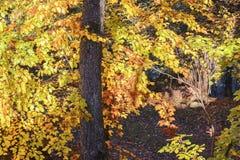 秋季山风景在一个晴朗的10月早晨 图库摄影