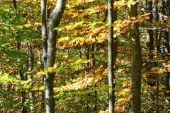 秋季山风景在一个晴朗的10月早晨 库存照片