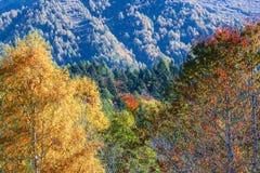 秋季山风景在一个晴朗的10月早晨 免版税图库摄影