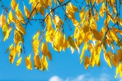 秋季日留下忧郁黄色 库存照片