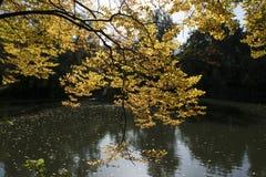 秋季日留下忧郁黄色 库存图片