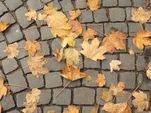 秋季日留下忧郁黄色 图库摄影