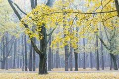 秋季树、下落的叶子和小径在被浸没的城市公园 免版税库存照片
