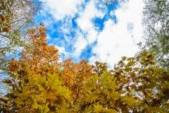 秋季树和蓝天 免版税库存图片