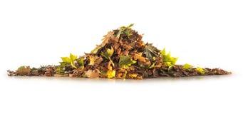 秋季树堆叶子 免版税库存照片