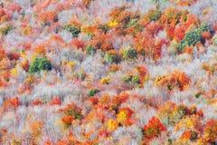 秋季树纹理背景  免版税库存图片