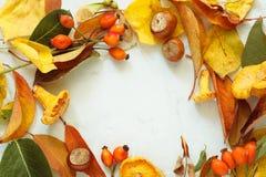 秋季框架 被分类的森林蘑菇 干蘑菇和秋叶 平的位置,顶视图 库存图片